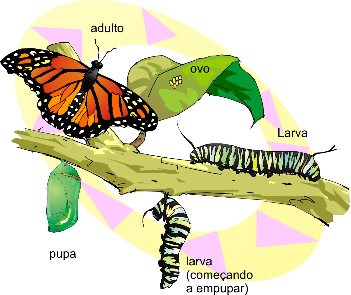 esquema_vj_ciencias_borboleta_b