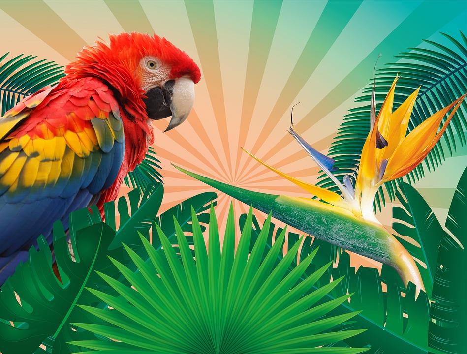 Inove: O Menu do Natal Tropical