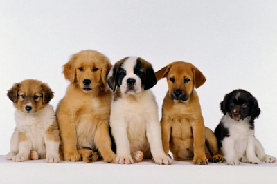 csm_cachorros-divulgac-a-o-dica-1_5fed167d47