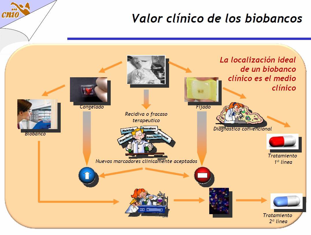 Biobanco: o Elixir da Juventude é questão de tempo