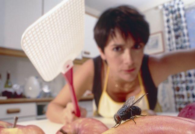 Isolamento, fome e insônia como as moscas